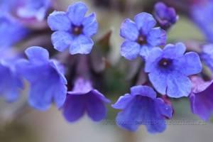 *Цветочный принт от природы*