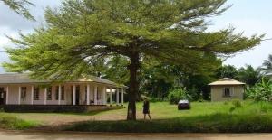 Дерево огромное и красивое)