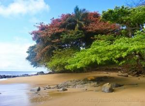 Берег Гвинейского залива