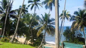 Пальмовый берег