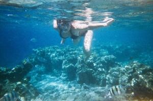 Коралловые рифы