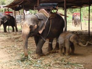 Уважаемые слоны)